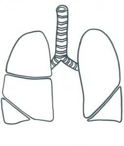 Coloriage des poumons