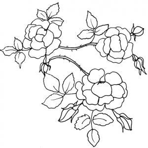 Imprimer le coloriage d'une branche de roses pour préparer une petite lettre de compliment, une poésie ou pour réaliser une carte à offrir en cadeau à ceux qu'on aime.