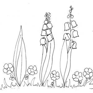 Coloriages sur le thème du muguet du 1er mai.Imprimer le coloriage de branches de muguet