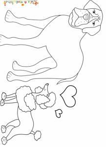 Le caniche amoureux du bouledogue