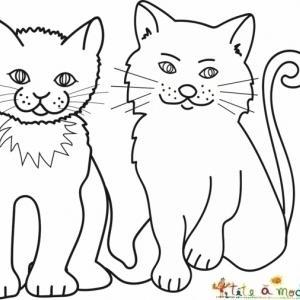 Coloriage deux chats européens vulgaires