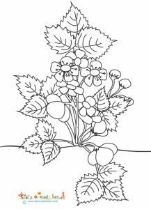 Gros fraisier en fleurs à colorier