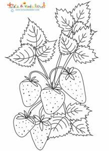 Coloriage de grosses fleurs sur le fraisier