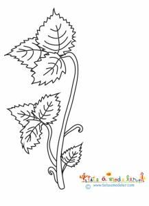 Le fraisier : naissance des feuilles