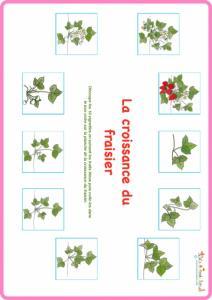 Planche des vignettes : cycle de vie du fraisier