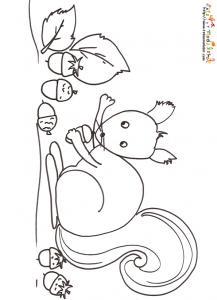 Coloriage ecureuil et les glands