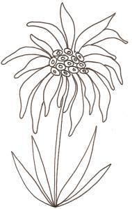 Coloriage Fleur Edelweiss.Coloriages Sur Les Fleurs Pour Enfant