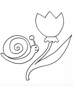 Coloriage de l'escargot à la tulipe