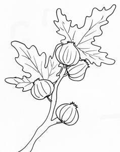 coloriage de figues sur la branche