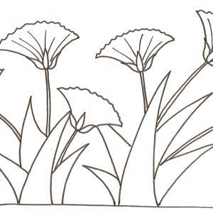 Coloriage de fleurs du Nil