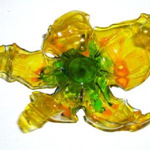 Fleur de Venise jaune