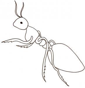 coloriage d'une fourmi