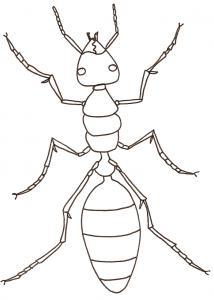 coloriage d'une fourmi ouvrière