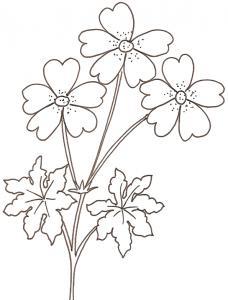 coloriage d'un geranium