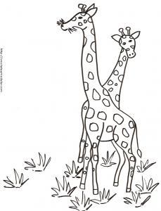 Coloriage de deux girafes dans les herbes