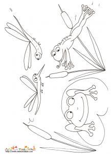 Coloriage de deux grenouilles