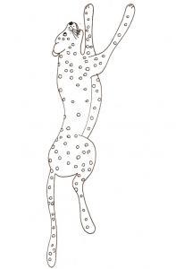 coloriage d'un guépard