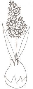 coloriage d'une jacinthe