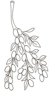 coloriage de kumquats