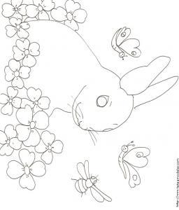 Coloriage d'un très beau lapin