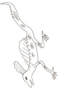 coloriage d'un lezard à longues pattes