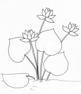 coloriage d'un lotus