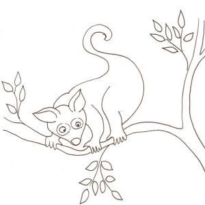 coloriage d'un opossum dans les arbres