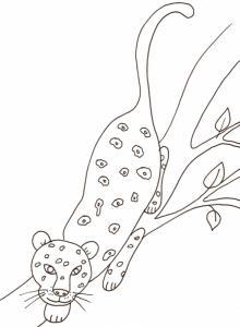 coloriage d'une panthere dans l'arbre