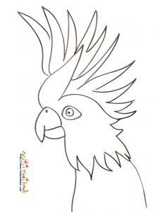 Coloriage tete de perroquet