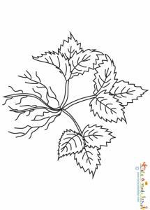 Fraisier avec petites racines à colorier