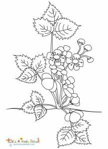 Coloriage du fraisier en fleurs