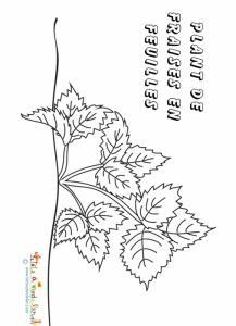 Coloriage des plantes : le fraisier