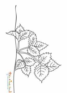 Un plant de fraisier à colorier