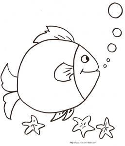 gros poisson qui fait des bulles devant les étoiles de mer