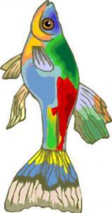 Petit poisson multicolore