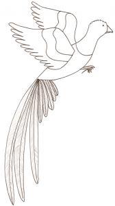 coloriage d'un quetzal : dessin d'oiseau à colorier