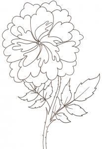 coloriage d'une rose ancienne