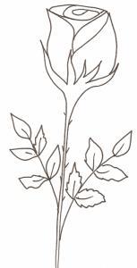 coloriage d'une rose