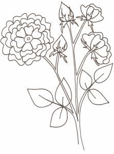 coloriage d'une branche de rosier