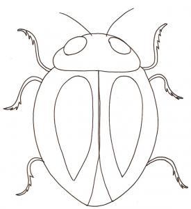 coloriage d'un scarabée