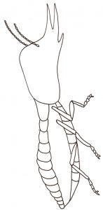 coloriage d'une termite soldat
