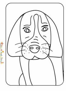 Tête de chien aux longue oreilles