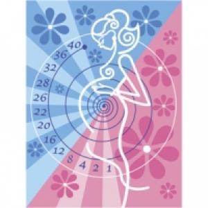 Calendrier grossesse officiel sur le temps de grossesse