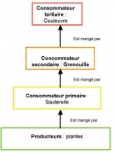 Consommateur et chaine alimentaire