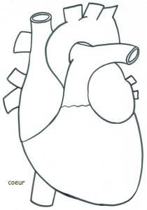 Coloriage des organes du corps pour apprendre leur nom