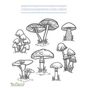 Planche de champignons d'automne à colorier