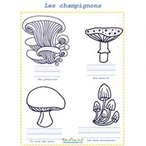 Coloriage de quatre champignons