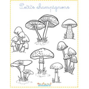 Petits champignons d'automne à colorier