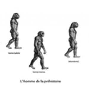 Evolution de l'homme depuis les origines