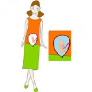 Bebe dans votre ventre a 5 mois grossesse